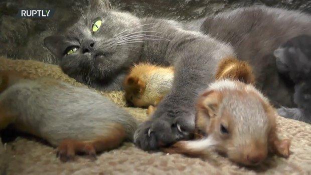 Majka je majka: Mačka usvojila veverice
